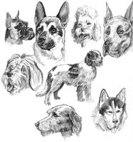 Sketches of Dogs by karmaela