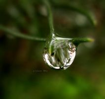 roly poly droplet by sinanTR