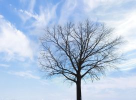 WinterTree Blue Sky  Sky Stock Photo DSC 0131 by annamae22