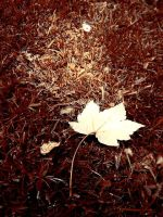 Autumn Leave by WinterDruidess