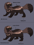MY Wolverine anatomy by Ash-Dragon-wolf