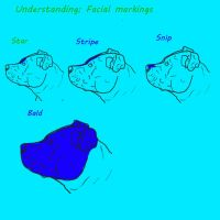 Understanding: Facial markings. by Banana-Stoner-Stable