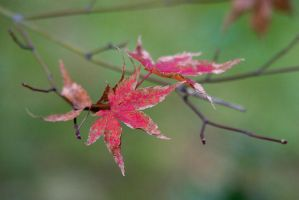 Fall color in the leaves 1 by dkbarto