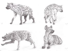 Hyenas study No.5 by Sheydy