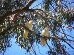 Home Among the Gum Trees. by katt-25