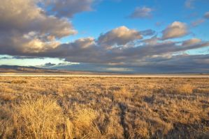 Golden Carrizo by PaulBrozenich