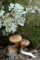 Shrooms by StolenSecrets
