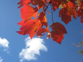Sky and Leaf Contrast by SnapshotsAtMidnight