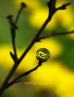 yellows of the garden by sinanTR