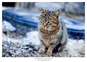 Fatty Kitty. by sergey1984