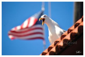 Eagle not Seagull by Momenti-Photo