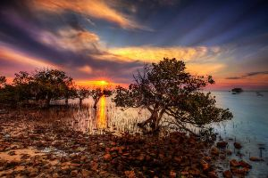 Mangrove sunset by Kounelli1
