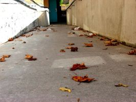 leaves by carlyx05x
