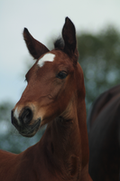 Foal stock 163 by Bundy-Stock