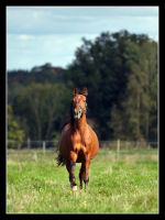 Afternoon Freedom by LovLus