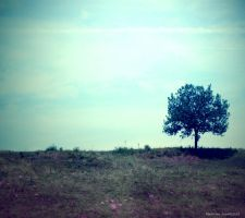 Lonely Tree 3 by Iulia-Oprinesc
