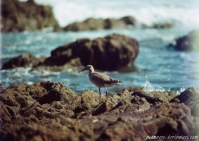 Life... by juanNeve