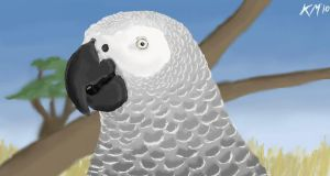 African Grey by clarinetplayer