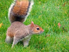 Curious squirrel by TheRafflesia