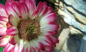Cool Coloring on a Flower by dananaboo
