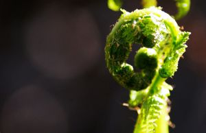 The green that symbolises Spring by JemImagesPhotography