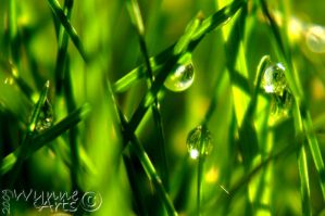 Morning Dew In The Jungle by PixelBlender