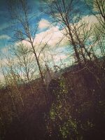 Sky and trees. by CindyLouWhoXox