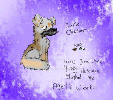 Chester by DRAGOXWOLF