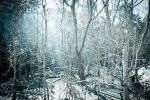 White Forest by JUNE900310