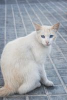 stray cat in montjuic by nynye