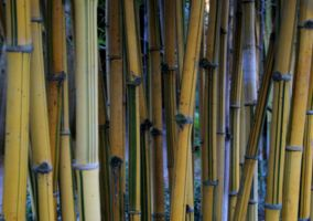 Bamboo Texture Background by KarahRobinson-Art