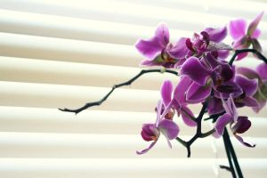 Orchids by Ann-INC
