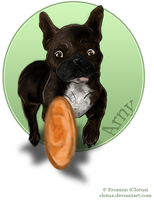 Arny Cathes Roll-Frisbee by clotus