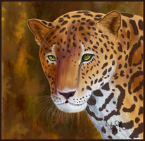 Jaguar by Sillybilly60