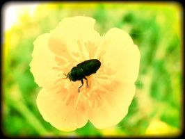 The Bug and the Flower by overstimlutaion