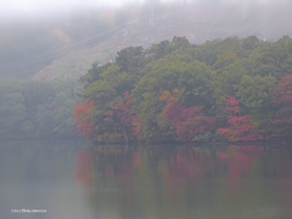 Early Autumn Fog by Mogrianne