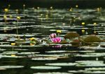 water lily pond ~ Stock by AStoKo by AStoKo