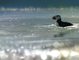 Puffin Paddle by heylorlass