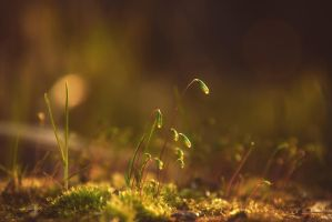 young moss by almaclone