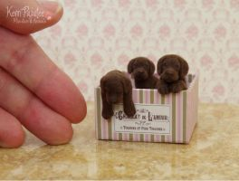 Box of Chocolate Lab Pups sculpture by Pajutee