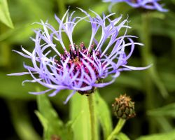 Thistles by azieser