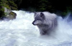 Wolf of the Water by Crystelly