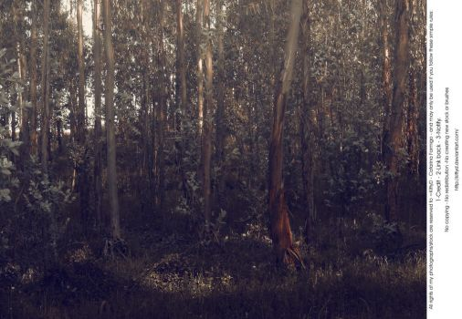 Fairy Forest 2 by KittyD
