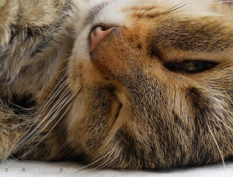 You think that I am sleeping by ZoranPhoto