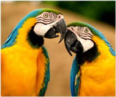 Parrot Love by Skip1967