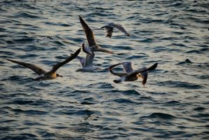 Istanbul 2012 - Seagull 2 by Demonescuro