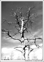 Weathered Tree by anotherview