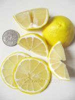 1:3 Lemon Wedges and Slices by Snowfern
