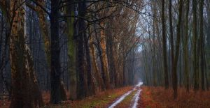 -The road of elders- by Janek-Sedlar