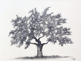 Apple Tree Graphite Drawing by aakritiarts